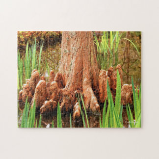 Bald Cypress Knees Puzzle
