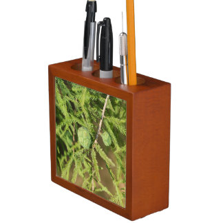 Bald Cypress Seed Cone Desk Organiser