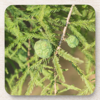 Bald Cypress Seed Cone Drink Coaster