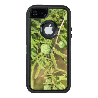 Bald Cypress Seed Cone OtterBox Defender iPhone Case