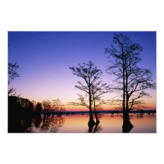 Bald cypress trees silhouetted at sunset, photo