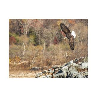 Bald Eagle at the Conowingo Dam Canvas Print
