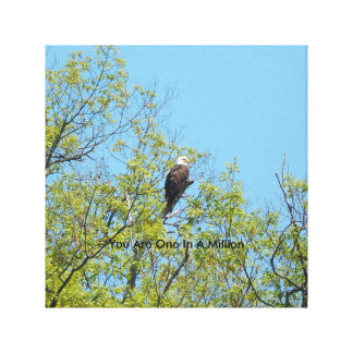 Bald Eagle Canvas One in a Million Stretched Canvas Prints