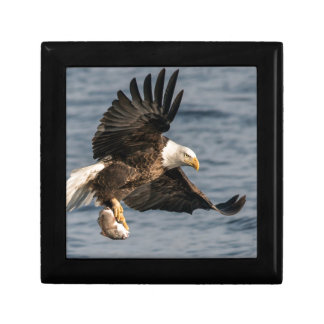 Bald Eagle Catching Food Gift Box