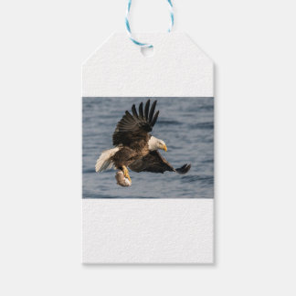 Bald Eagle Catching Food Gift Tags