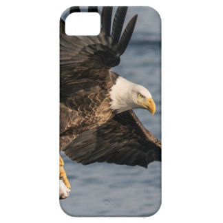 Bald Eagle Catching Food iPhone 5 Cover