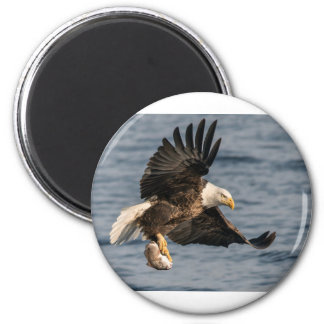 Bald Eagle Catching Food Magnet