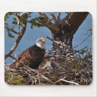 Bald Eagle Chicks - Mousepad