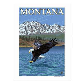 Bald Eagle Diving - Montana Postcard