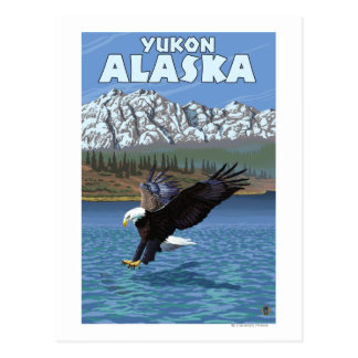 Bald Eagle Diving - Yukon, Alaska Postcard