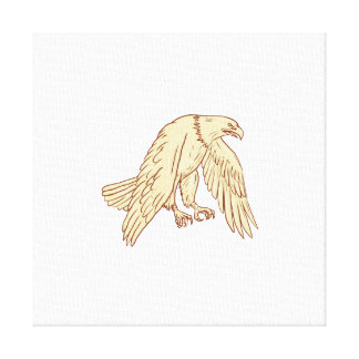 Bald Eagle Flying Wings Down Drawing Canvas Print