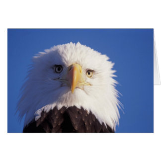 bald eagle, Haliaeetus leucocephalus, head shot, Greeting Card