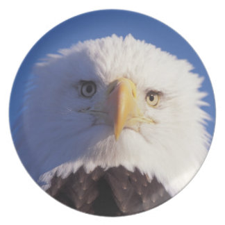 bald eagle, Haliaeetus leucocephalus, head shot, Plates