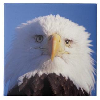 bald eagle, Haliaeetus leucocephalus, head shot, Ceramic Tiles