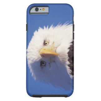 bald eagle, Haliaeetus leucocephalus, head shot, Tough iPhone 6 Case