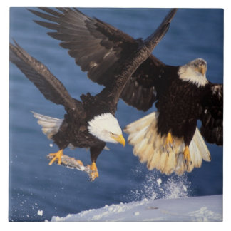 bald eagle, Haliaeetus leucocephalus, taking off Ceramic Tile