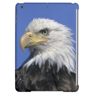Bald Eagle, (Haliaeetus leucocephalus), wild,