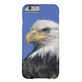 Bald Eagle, (Haliaeetus leucocephalus), wild, Barely There iPhone 6 Case