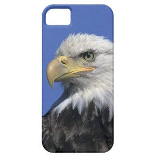 Bald Eagle, (Haliaeetus leucocephalus), wild, Case For The iPhone 5