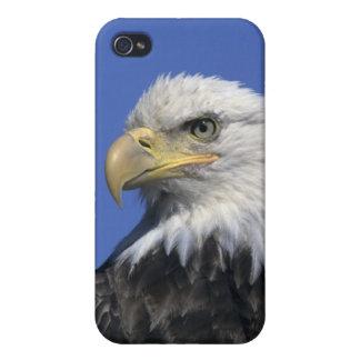Bald Eagle, (Haliaeetus leucocephalus), wild, iPhone 4 Case