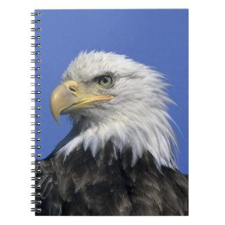 Bald Eagle, (Haliaeetus leucocephalus), wild, Notebook