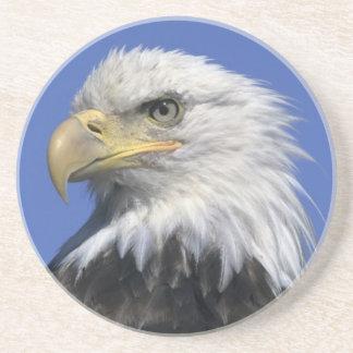 Bald Eagle, (Haliaeetus leucocephalus), wild, Sandstone Coaster