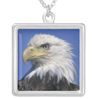 Bald Eagle, (Haliaeetus leucocephalus), wild, Square Pendant Necklace