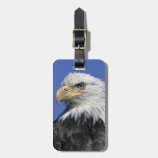 Bald Eagle, (Haliaeetus leucocephalus), wild, Travel Bag Tags