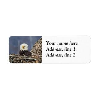 Bald Eagle having a bad hair day Return Address Label
