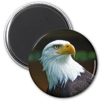 Bald Eagle Head 001 02.1 rd Magnet