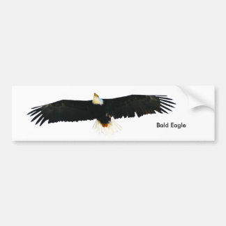 Bald Eagle image for Bumper-Sticker Bumper Sticker