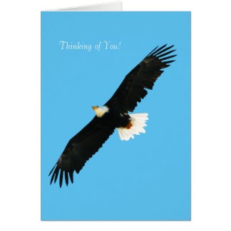 Bald Eagle image for Greeting-card Card