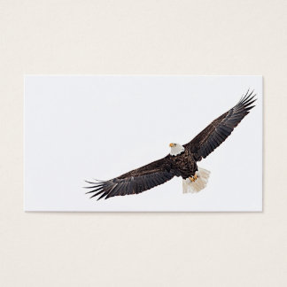 Bald Eagle in flight Business Card