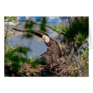 Bald Eagle leaving the nest Card