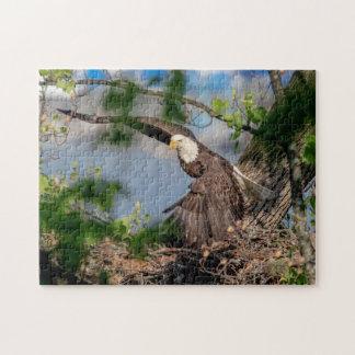 Bald Eagle leaving the nest Jigsaw Puzzle