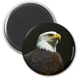 Bald Eagle Magnet