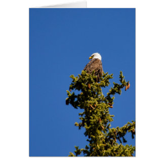 Bald Eagle on Snake River - Blank Greeting Card