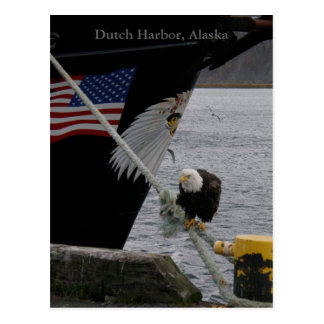 Bald Eagle Perched on a Mooring Line, Dutch Harbor Postcard