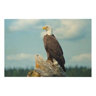 Bald Eagle perched on log, Canada Wood Print