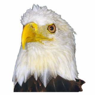 Bald Eagle Photo Sculpture