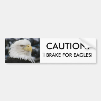 Bald Eagle Portrait Photo Bumper Sticker
