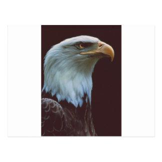Bald Eagle Postcard