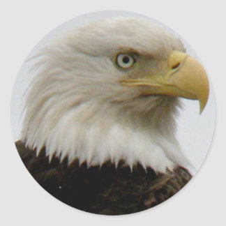 Bald Eagle Profile Photo on Unalaska Island Classic Round Sticker