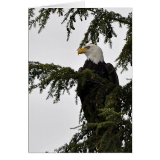 Bald Eagle Sitting in a Fir Tree Card