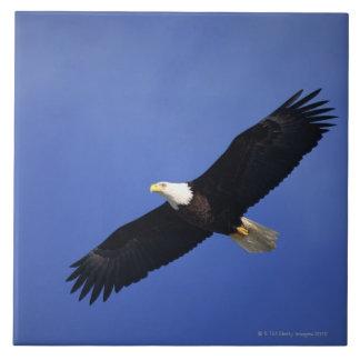 Bald eagle soaring , Alaska Ceramic Tile