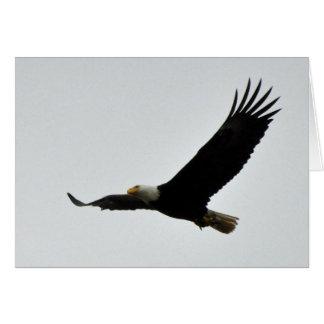 Bald Eagle Soaring Card