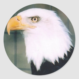 Bald Eagle Sticker