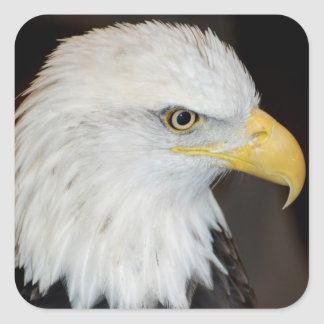Bald Eagle Stickers