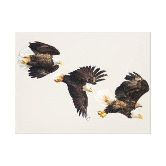 Bald Eagle Triple Flight Canvas Print