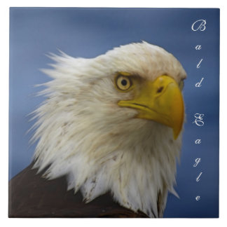 Bald Eagle Wildlife Photo Gift Tile or Trivet